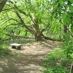 Tree in Bird Sanctuary, Asheville